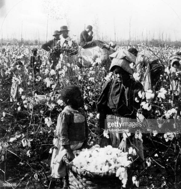 Black American cottonpickers working in the fields in the American South