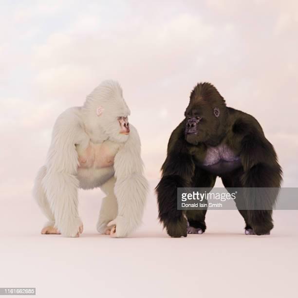 black and albino mountain gorillas - gorilla hand stock photos and pictures