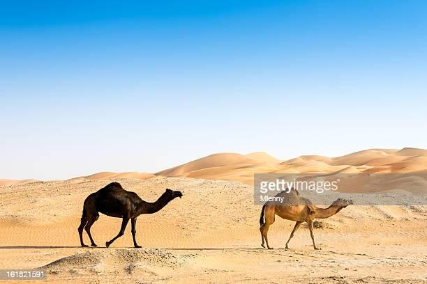 schwarz und braun camel zusammen - camel active stock-fotos und bilder