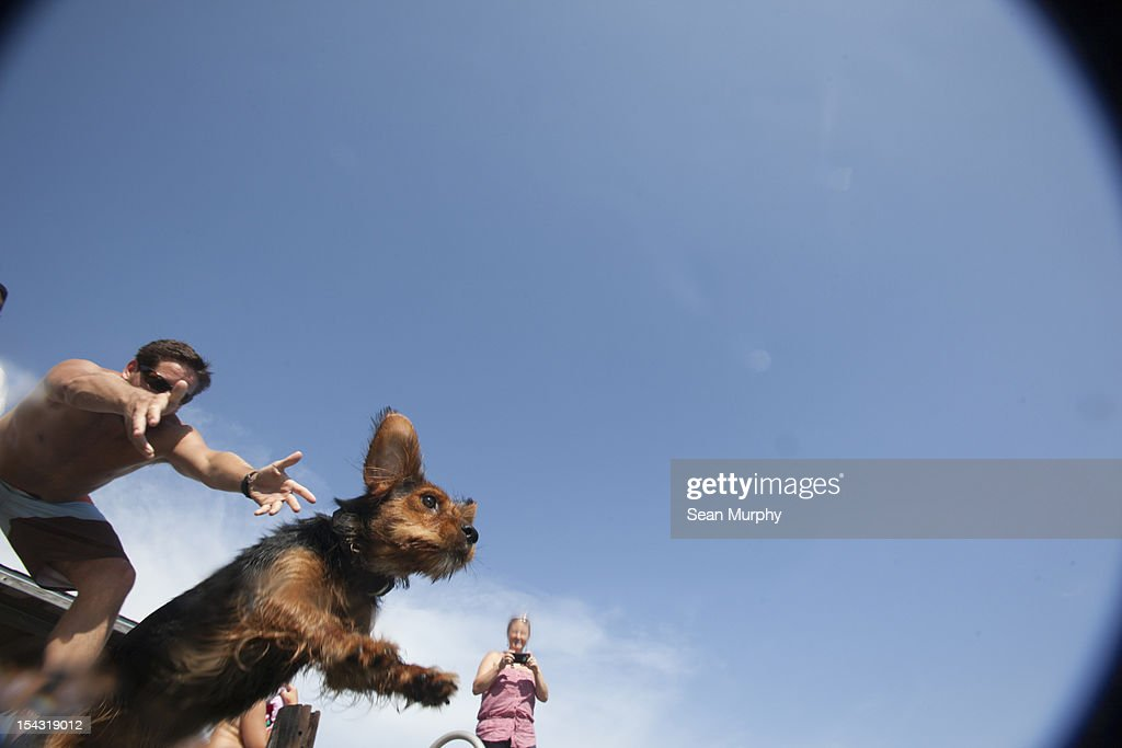 Black and Brown Terrier Jumping into a Lake : Stock Photo