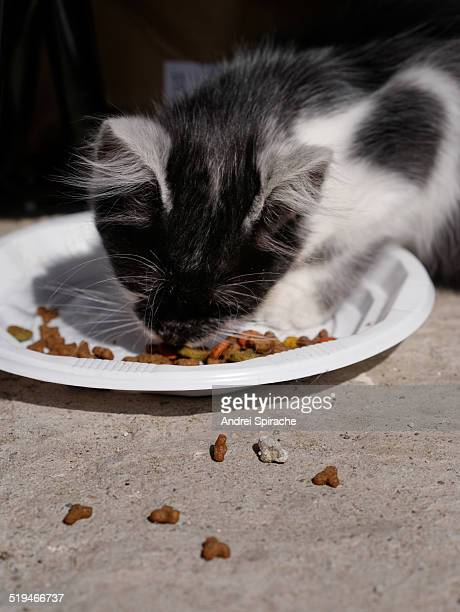 black and white cat eating from a plastic plate - plastic plate stock photos and pictures
