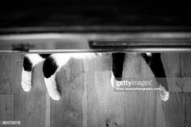 Black and White cat feet poking out from table