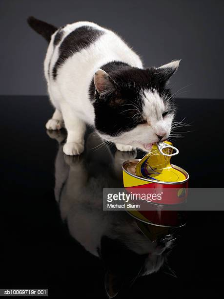 Black and white cat opening can of sardines with mouth