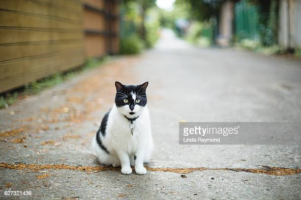 black and white cat sitting in a alley