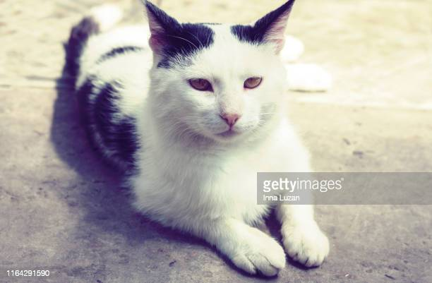 black white cat sitting sidewalk street