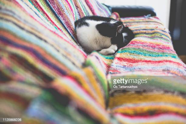 black and white cat sleeping over knitted colorful blanket - vinter os bildbanksfoton och bilder