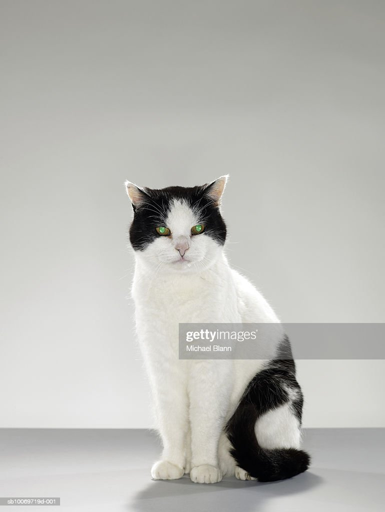 Black and white cat with glowing green eyes : Stock Photo