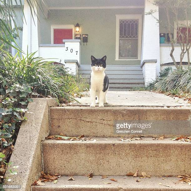 Black and white cat with yellow eyes outside on front steps
