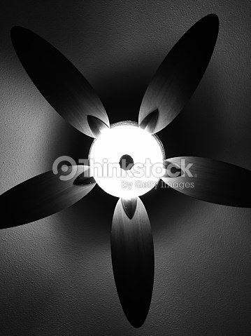 Black And White Ceiling Fan Resembling Flower Petals