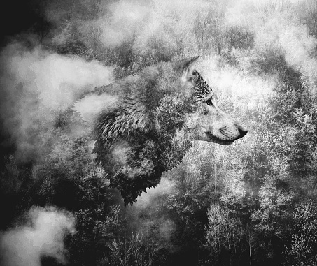 Black and White Collage: Wolf Head and the Misty Forest. 1035963878