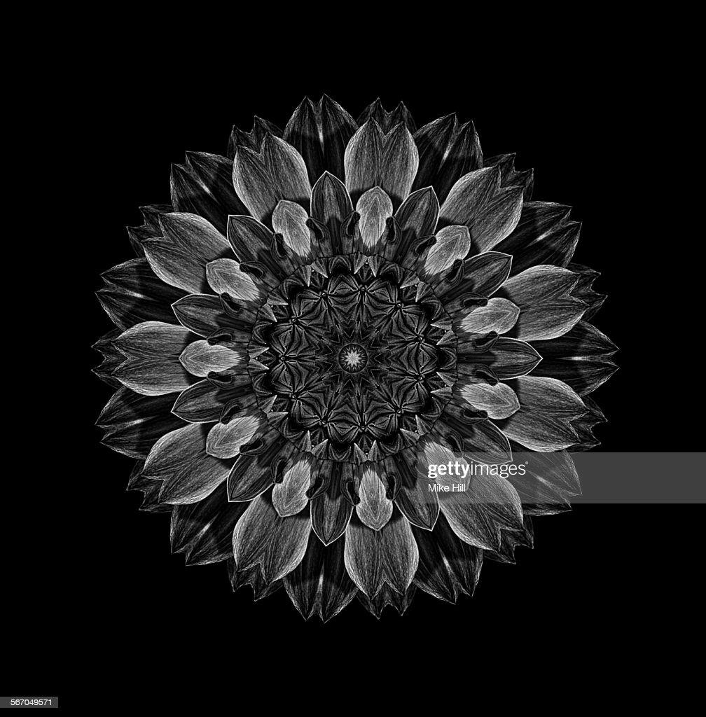 Black and white dahlia flower mandala stock photo getty images black and white dahlia flower mandala stock photo izmirmasajfo
