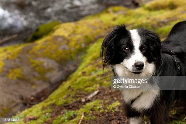 Black and White Dog on a Hike