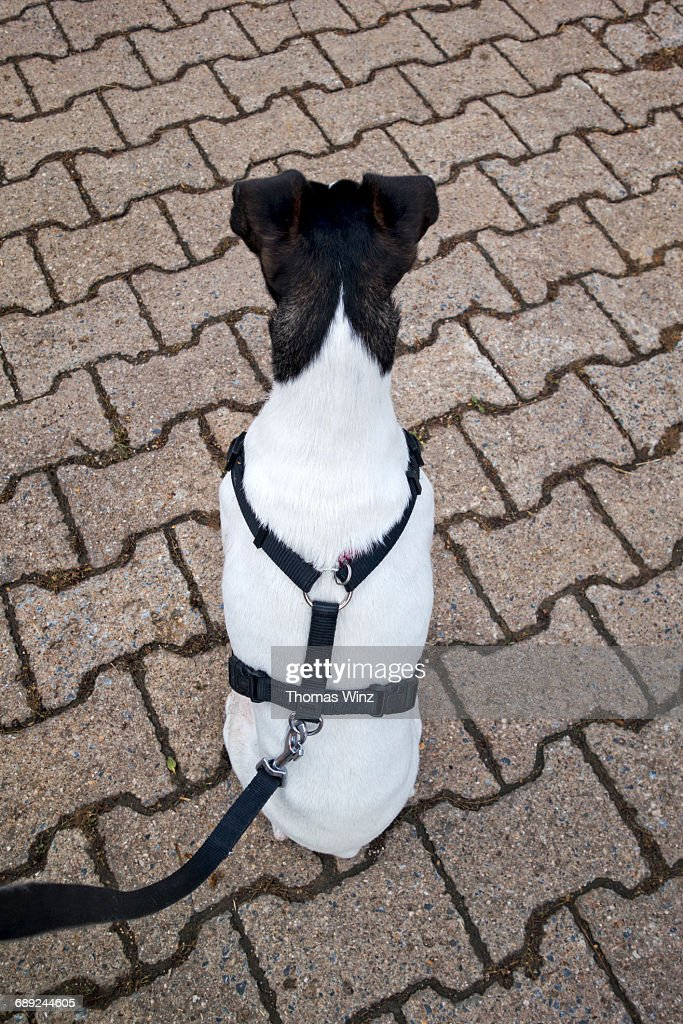Black and white dog : Stock Photo