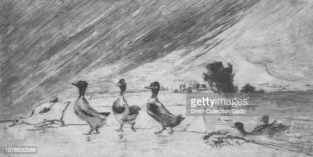 Black and white etching depicting a heavy downpour of rain, with a small flock of ducks climbing onto the shore in the foreground, presumably to seek...