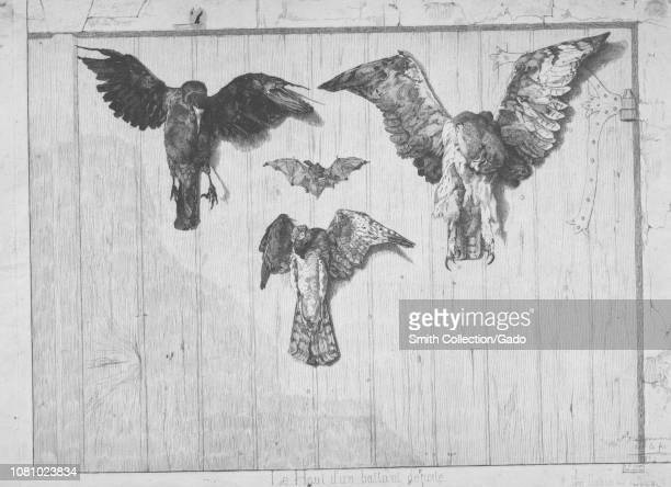 Black and white etching depicting a trio of dead birds including a raven an owl and a sparrowhawk pinned to a wooden door with a bat between them...