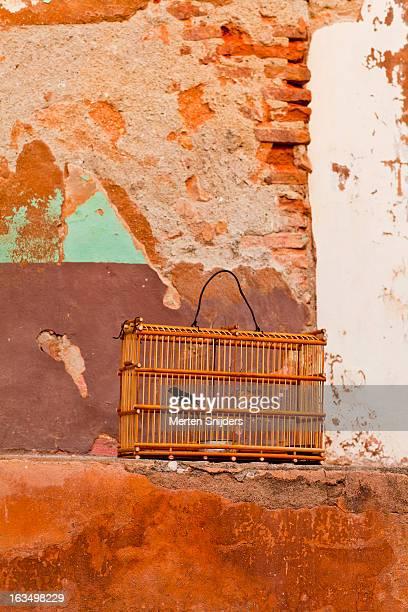 black and white finch in cage - merten snijders stockfoto's en -beelden