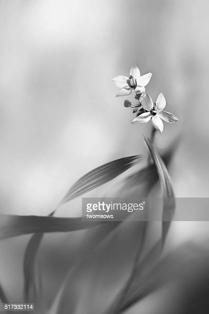 Black and white floral fine art photography.