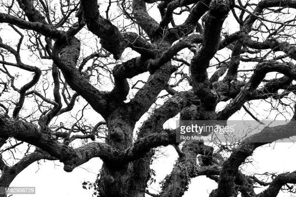 black and white of mystery trees - tree trunk stock pictures, royalty-free photos & images