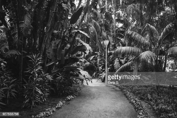 black and white park of malaga - blanco y negro stock pictures, royalty-free photos & images