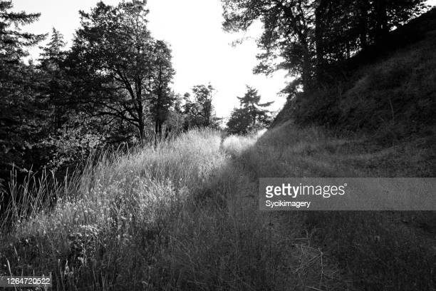 black and white path through meadow — light and shadow - black and white instant print stock pictures, royalty-free photos & images