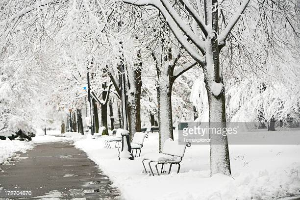 black and white photo of a snow covered park - cambridge massachusetts stock pictures, royalty-free photos & images