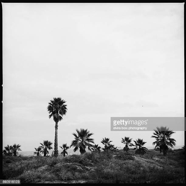 black and white - castellon de la plana stock photos and pictures