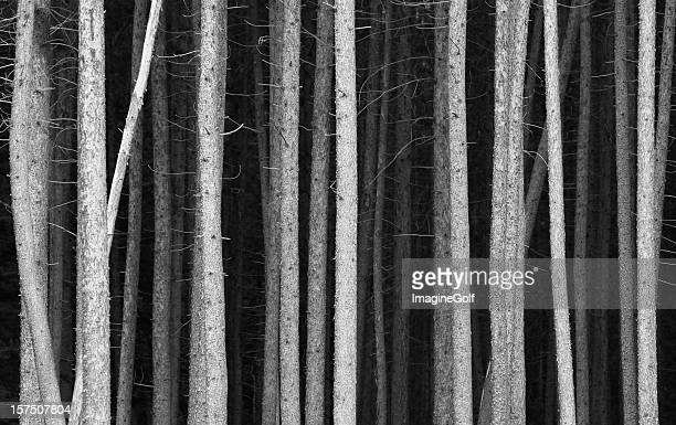 black and white pine tree trunks background - zwart wit stockfoto's en -beelden