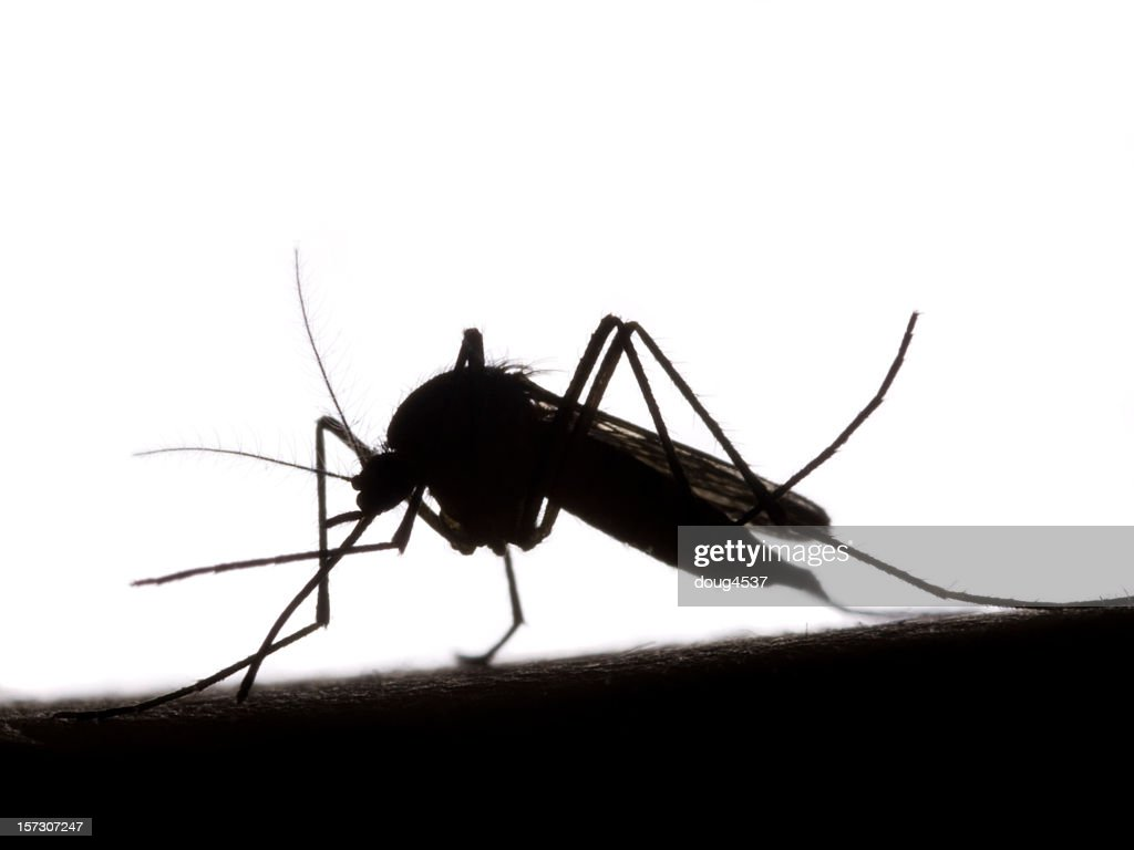 Black and white silhouette of mosquito : Stock Photo