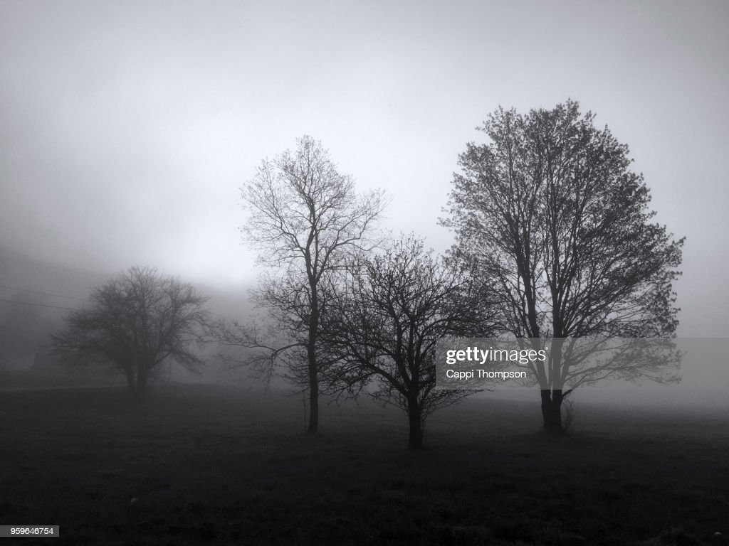 Black and white stand of trees during foggy morning in Dummer, New Hampshire USA : Stock-Foto
