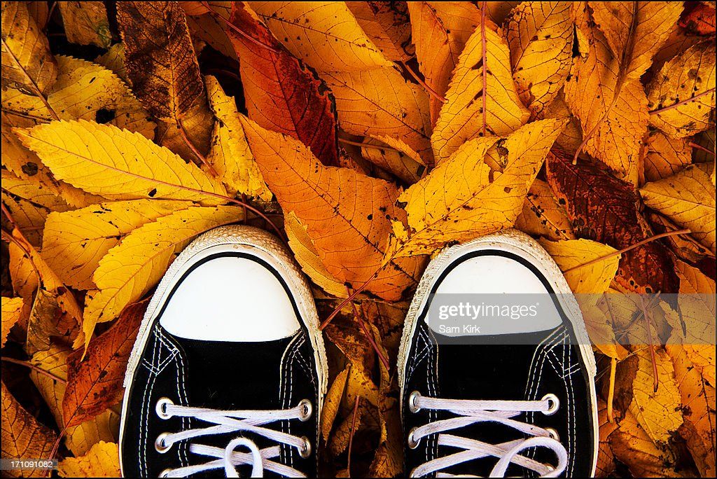 Black and white trainers on autumnal leaves : Stock Photo