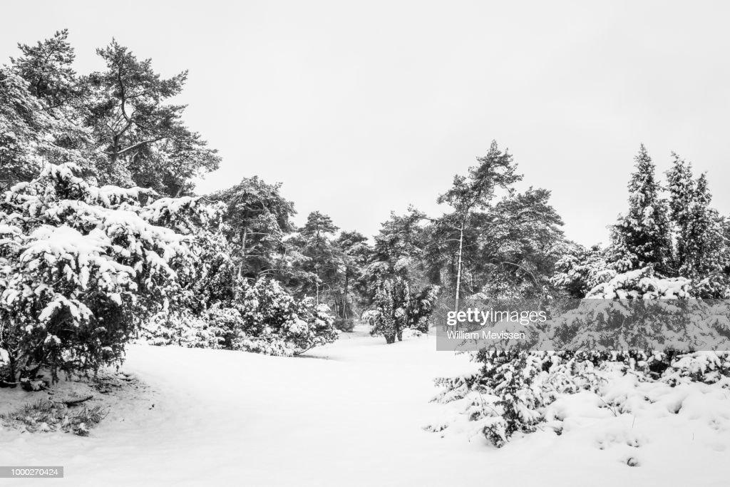 Black and White Winter : Stockfoto