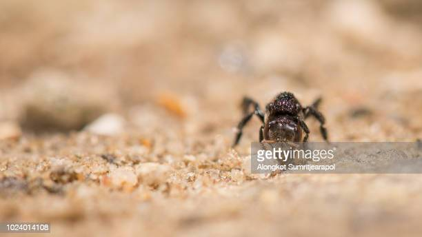 Black ant is eating their food on stone ground.