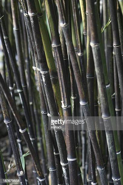 black bamboo - black bamboo stock pictures, royalty-free photos & images