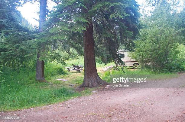 Black bear cub in a campground