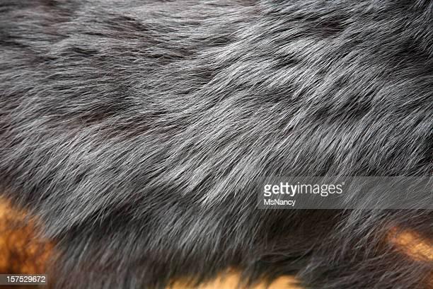 Black Bear Hide