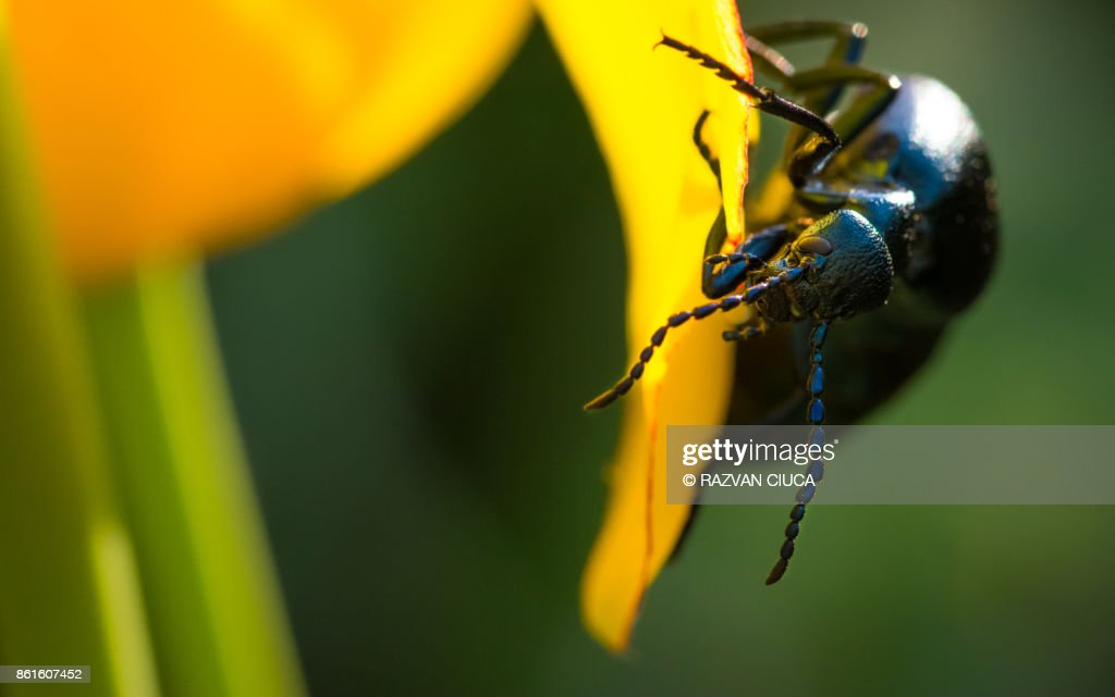 Black Beetle Stock Photo - Getty Images