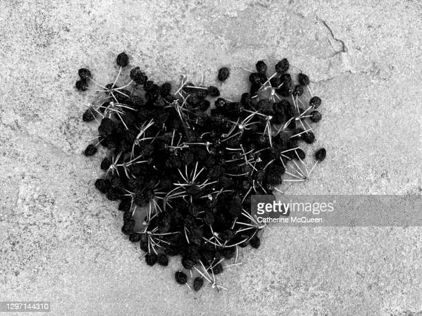 black berries arranged in shape of heart - marriage stock pictures, royalty-free photos & images