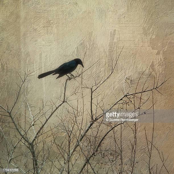 Black bird on a tree