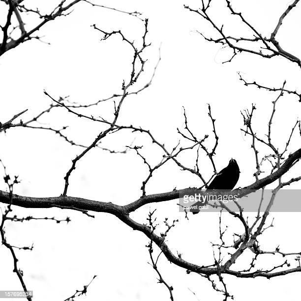 ブラックバードに座るスプーキー leafless 木の枝