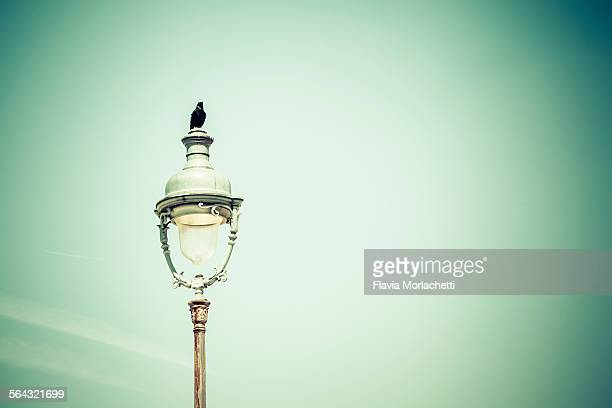 black bird standing on street light in paris - blackbird stock pictures, royalty-free photos & images