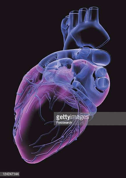 black, black background, anatomy - heart internal organ stock pictures, royalty-free photos & images