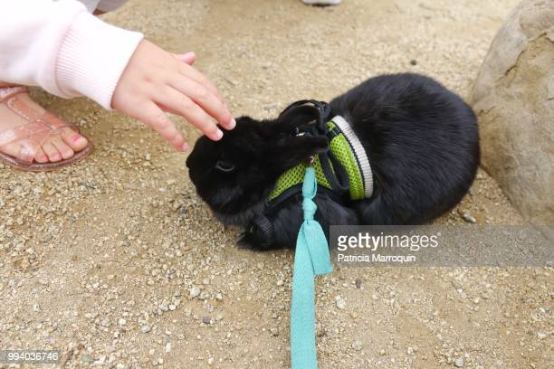 Black Bunny Along the Boardwalk