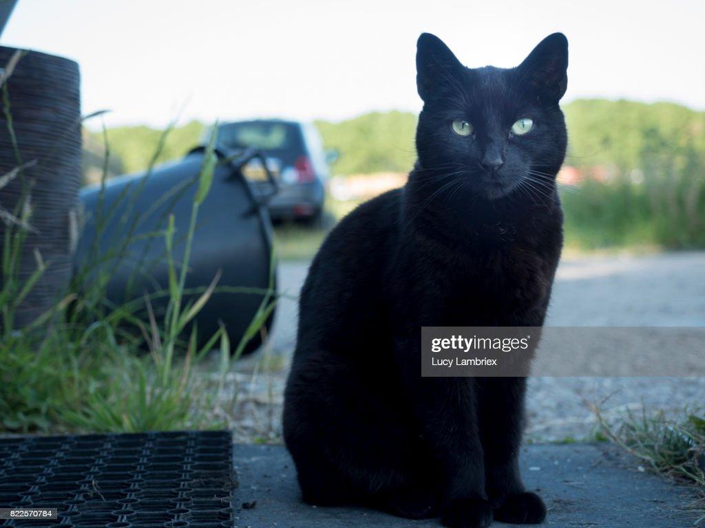 Black cat among black objects : Stock Photo