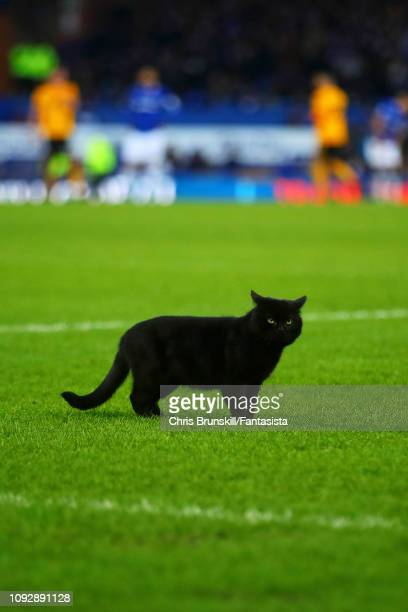 A black cat appears on the pitch during the Premier League match between Everton FC and Wolverhampton Wanderers at Goodison Park on February 2 2019...