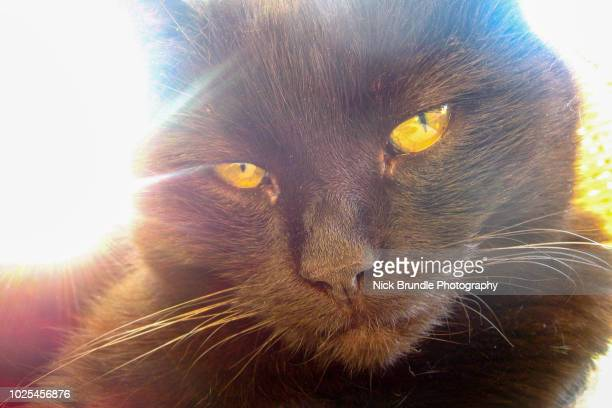 black cat appreciation day - under tongue stock pictures, royalty-free photos & images