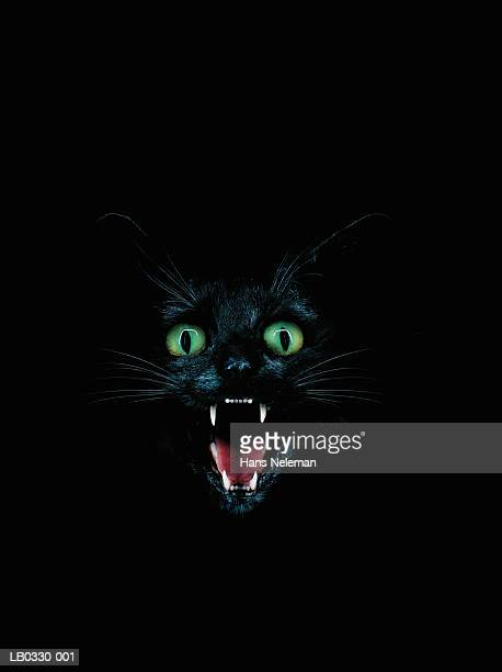 black cat baring fangs - evil stock photos and pictures