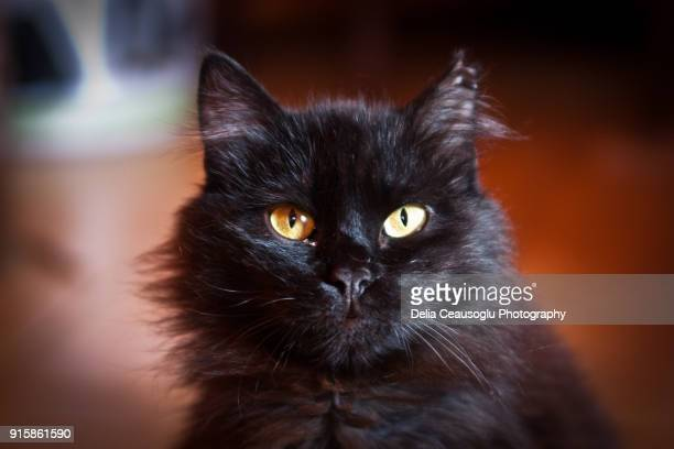 Black cat beauty