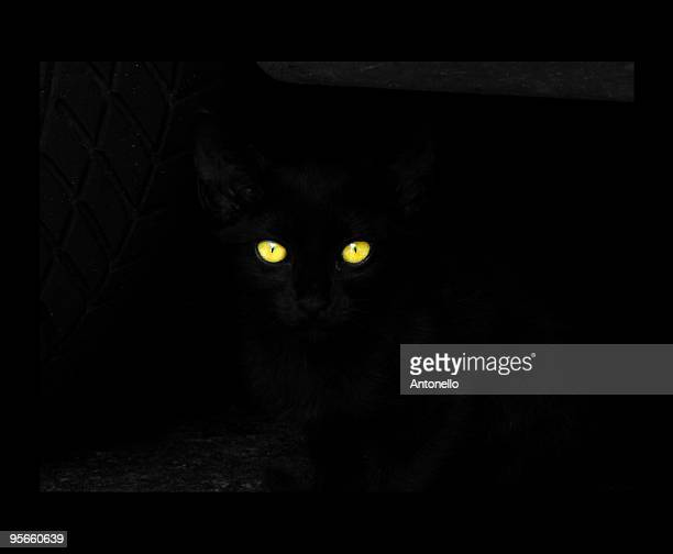 Black cat, close-up of yellow eyes