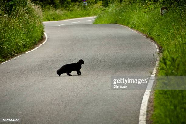 black cat crossing - luck stock photos and pictures