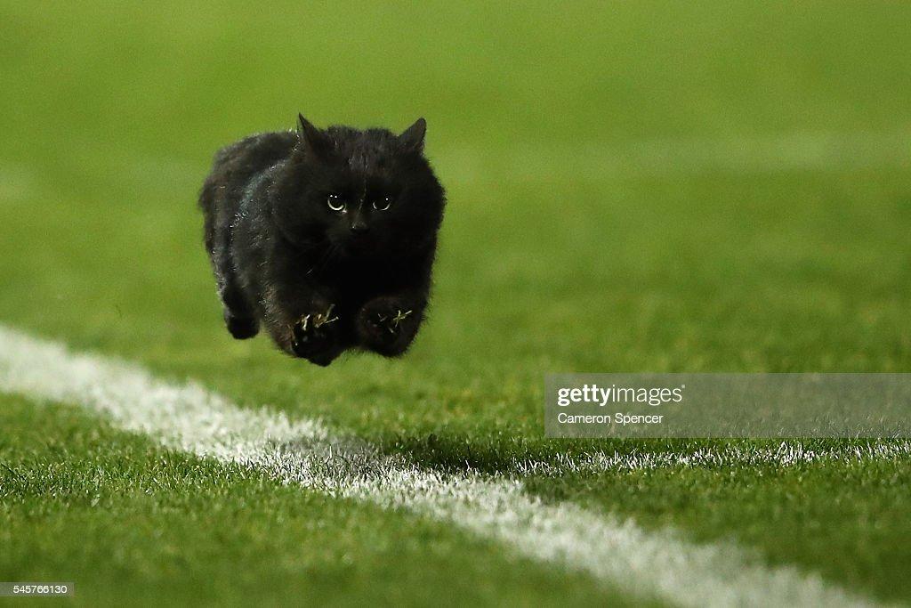 NRL Rd 18 - Panthers v Sharks : News Photo